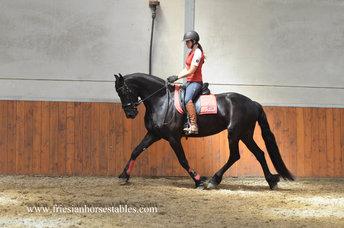 Talitha - Thorben 466 Sport-Elite x Harmen 424 Sport - In foal by Ulbran 502 for 2019!