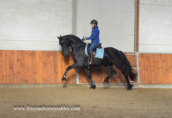 Yndi is sold to Eric and Miranda in Holland - Congratulations with this nice future sports mare!!