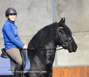 Baron is sold to Bettina in Germany - Congratulations with this beautiful baroque stallion!