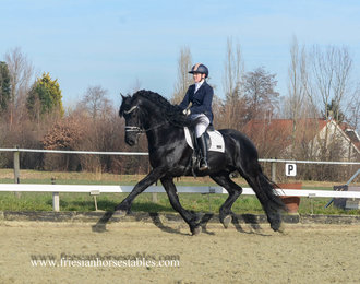 Rienk - Norbert 444 Sport+Pref x Tsjalke 397 - Dressage prospect for the highest levels! Young rider horse!