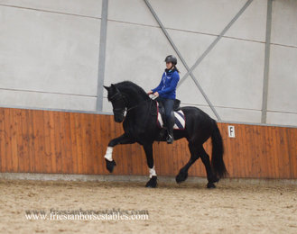 Victor is sold to Melanie in Germany - Congratulations with this big gentle man!!