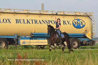 Wille is sold to Danny, Priscilla, Luca and Vincenzo in Holland - Congratulations with this great mare!