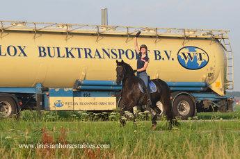Wille is verkocht aan Danny, Priscilla, Luca en Vincenzo in Nederland - Van harte gefeliciteerd met deze fantastische merrie!
