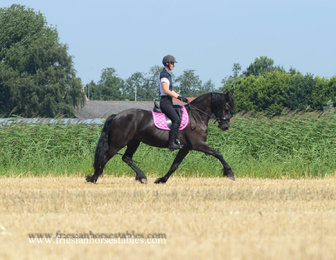 Teaske is sold to Anne-Marie in Belgium - Congratulations with this dream come true Friesian mare!!