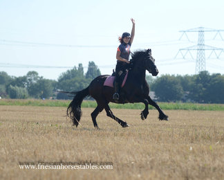 Wiesje is sold to Mandy in The Netherlands - Congratulations with this amazing sweet mare!!