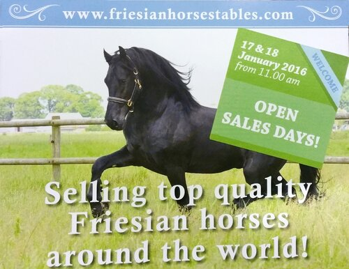 News - High quality Friesian horses for sale