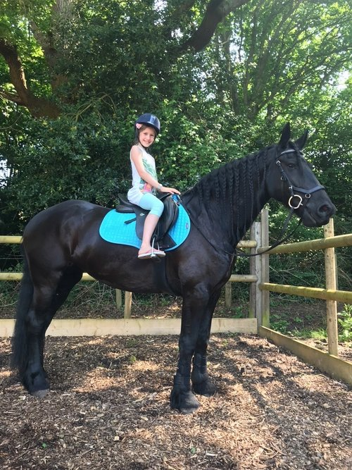 Reaction about the horse Merle - High quality Friesian horses for sale